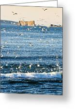 Gannets In Flight And Perce Rock Greeting Card