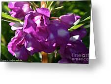 Garden Balsam Greeting Card