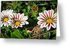 Garden Beauties Greeting Card