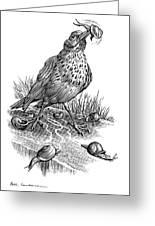 Garden Bird Catching Snails, Artwork Greeting Card by Bill Sanderson