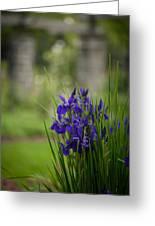 Garden Blue Irises Greeting Card