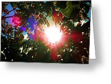 Garden Cover Greeting Card