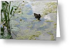 Garden Duck Greeting Card