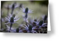 Garden Facets Greeting Card