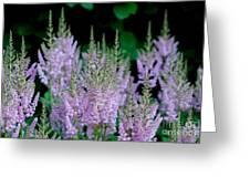 Garden Forest Greeting Card