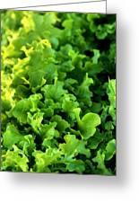 Garden Fresh Salad Bowl Lettuce Greeting Card