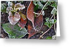 Garden Frost Greeting Card