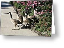 Garden Geese Parade Greeting Card