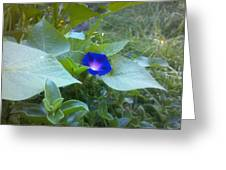 Garden Glory  Greeting Card