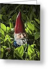 Garden Gnome No 0065 Greeting Card