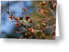 Garden Hummer Greeting Card