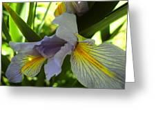 Garden Iris Greeting Card
