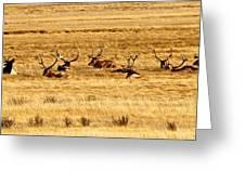 Garden Of Elk Greeting Card