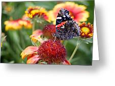 Garden Svengali Greeting Card