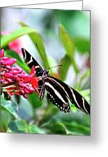 Garden Zebra Longwing Greeting Card