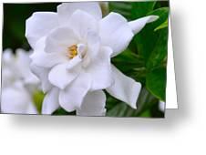 Gardenia II Greeting Card by Lori Kesten