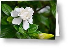 Gardenia Greeting Card by Lori Kesten