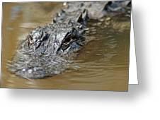 Gator 3 Greeting Card
