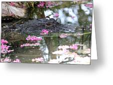 Gator Among Crape Myrtle Greeting Card