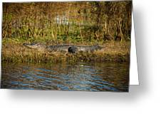 Gator Break Greeting Card