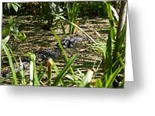 Gator Sunning Greeting Card