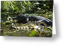 Gator Time Greeting Card