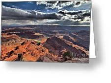 Gazing Into The Sky Greeting Card