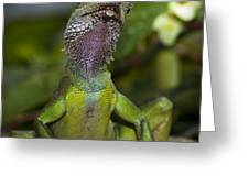 Gecko Leopard Greeting Card