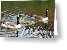 Geese And Goslings Greeting Card