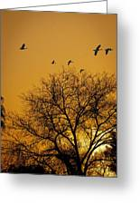 Geese At Sunrise Greeting Card