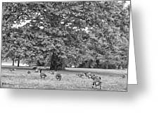 Geese By The River Greeting Card by Bill Cannon