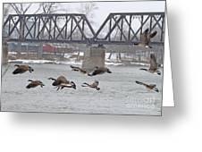 Geese In Flight Greeting Card