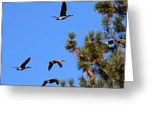 Geese In Tahoe Greeting Card by Ernie Claudio
