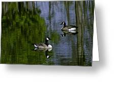 Geese On The Pond Greeting Card