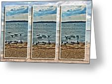 Geese Point Landing Triptych Greeting Card