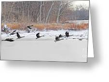 Geese Take Flight Over The Maumee River Greeting Card