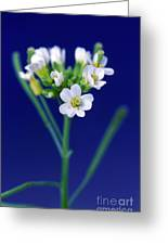 Genetically Modified Plant Greeting Card