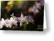 Gentle Light Greeting Card