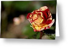 George Burns Rose Greeting Card