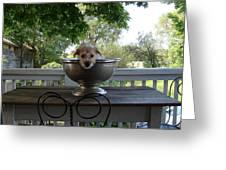 George In A Bowl Greeting Card by Mark Haley