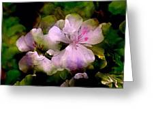 Geranium 8 Greeting Card