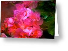 Geranium 9 Greeting Card