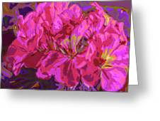 Geranium Pop Greeting Card