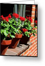 Geraniums In Germany Greeting Card by Carol Groenen