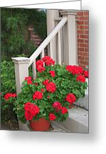 Geraniums On The Steps Greeting Card