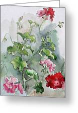 Geraniums Greeting Card by Stephanie Aarons