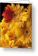 Gerbera Daisy With Orange Petals Greeting Card