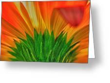 Gerbera Explosion Greeting Card