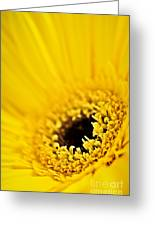 Gerbera Flower Greeting Card