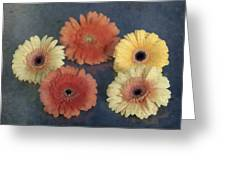 Gerberas Greeting Card